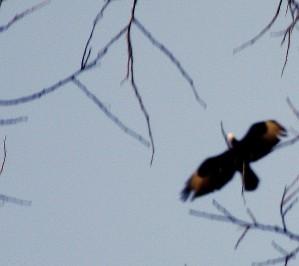 Spiral Flight